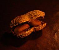 раковина арахисов Стоковые Изображения RF