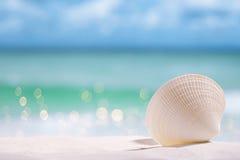 раковина белого моря на песке и море пляжа Стоковое Изображение RF
