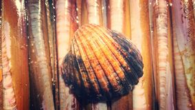 Раковина бритвы Стоковая Фотография RF