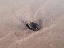 Раковина в песке Стоковое Изображение RF