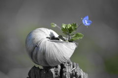 раковина в цветке Thé Стоковые Фотографии RF