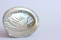 Раковина галиотиса Стоковые Фото