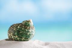 Раковина зеленого моря на белом песке пляжа Флориды под светом солнца Стоковые Фотографии RF