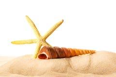 Раковина и звезда моря в песке Стоковое Изображение RF