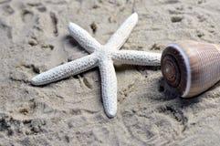 Раковина и морская звёзда моря Стоковое Изображение RF