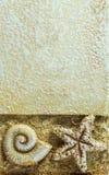 Раковина и морские звёзды моря на предпосылке Брайна, Closeu Стоковая Фотография RF