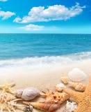 Раковина и морские звёзды на песчаном пляже Стоковая Фотография