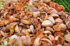 Раковина кокоса на поле Стоковая Фотография RF