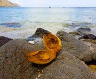 Раковина кокоса разделения в наветренных островах Стоковая Фотография RF