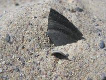 Раковина мидии на песке Стоковая Фотография RF