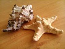 раковина морской звезды и белый камешек Стоковое Фото