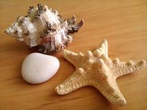 раковина морской звезды и белый камешек Стоковое Изображение