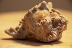Раковина моря в драматическом освещении стоковые изображения