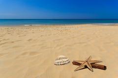 Раковина моря в пляже Стоковые Изображения RF