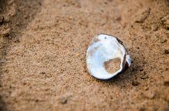 Раковина моря лежа на песчаном пляже Стоковые Фотографии RF