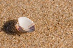 Раковина моря лежа на пляже Стоковое фото RF