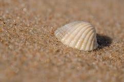 Раковина моря лежа на пляже Стоковая Фотография