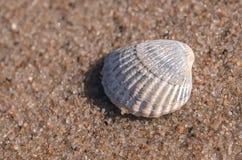 Раковина моря лежа на пляже Стоковые Фотографии RF