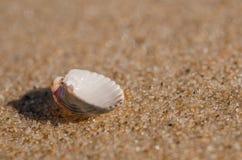Раковина моря лежа на пляже Стоковые Фото