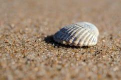 Раковина моря лежа на пляже Стоковые Изображения