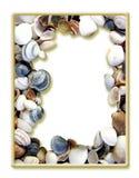 раковина моря изображения рамки Стоковое Фото
