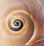 раковина моря крупного плана Стоковое Изображение RF