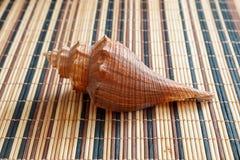 Раковина моря, наяды, gastropods стоковое фото