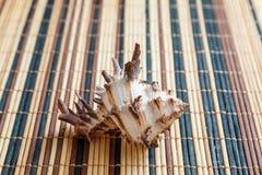 Раковина моря, наяды, gastropods стоковая фотография rf