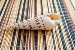 Раковина моря, наяды, gastropods стоковые изображения