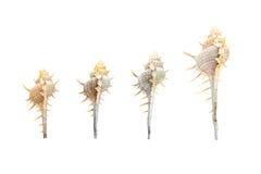 Раковина моря на белизне Стоковые Фото