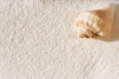 Раковина моря на белой предпосылке песка Стоковое Изображение RF