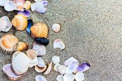 Раковина моря на конце пляжа песка вверх Стоковое фото RF