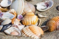 Раковина моря на конце пляжа песка вверх Стоковые Изображения