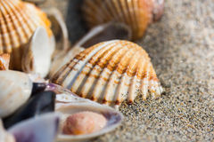 Раковина моря на конце пляжа песка вверх Стоковые Изображения RF