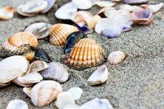 Раковина моря на конце пляжа песка вверх Стоковые Фотографии RF