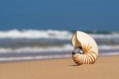Раковина моря на песчаном пляже на тропическом острове Стоковое Изображение RF