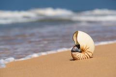 Раковина моря на песчаном пляже на тропическом острове Стоковое Изображение