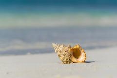 Раковина моря на песчаном пляже на тропическом острове Стоковые Изображения