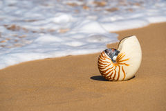 Раковина моря на песчаном пляже на тропическом острове Стоковые Фотографии RF