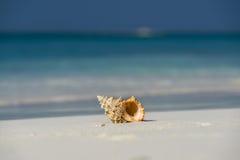 Раковина моря на песчаном пляже на тропическом острове Стоковая Фотография