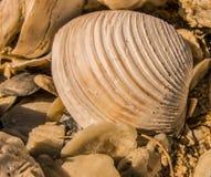 Раковина моря на пляже стоковая фотография rf