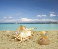 Раковина моря на пляже Стоковое Изображение RF