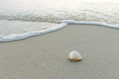 Раковина моря на пляже Стоковое Изображение