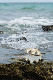 Раковина моря на пляже Nuan стоковые фото