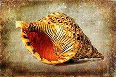 Раковина моря - на текстуре Стоковая Фотография