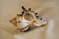 Раковина моря на том основании стоковая фотография rf