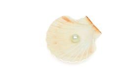 раковина моря перлы Стоковые Изображения RF