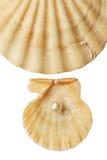 раковина моря перлы Стоковые Фотографии RF
