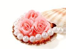 раковина моря перл розовая Стоковая Фотография RF