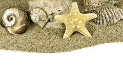 раковина моря песка пляжа Стоковые Фотографии RF